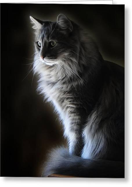 Backlit Kitty Greeting Card by Carolyn Fletcher