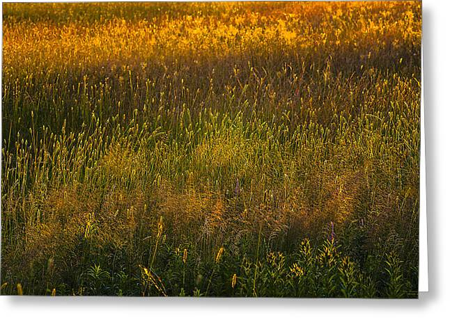 Greeting Card featuring the photograph Backlit Meadow Grasses by Marty Saccone