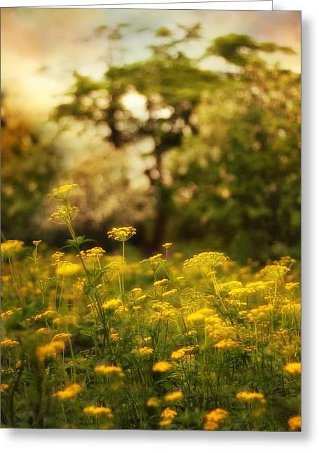 Backlit Meadow Greeting Card