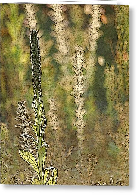 Greeting Card featuring the photograph Backlit Mullein In A Meadow by Rob Huntley