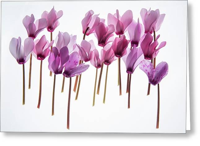 Backlit Violet Greeting Card