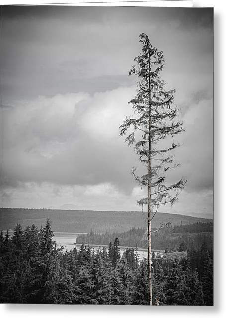 Tall Tree View Greeting Card