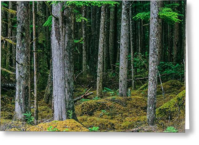 Inside View Backroad Forest Greeting Card