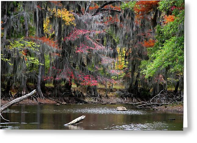 Backwater Autumn Greeting Card by Lana Trussell