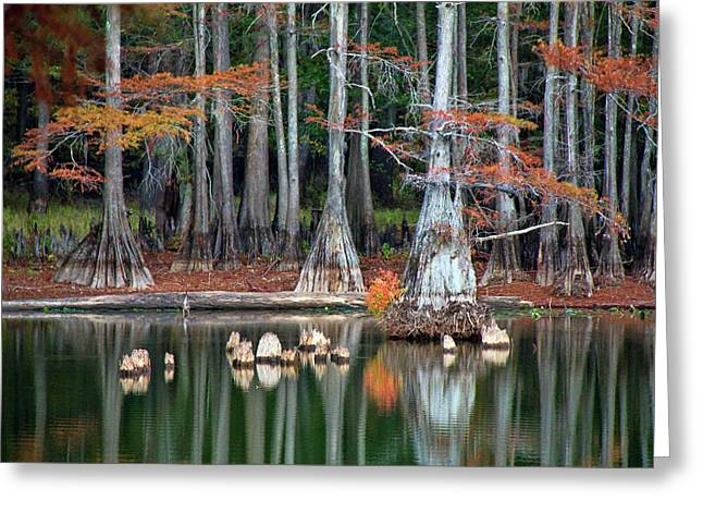 Backwaters Greeting Card by Lana Trussell