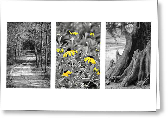 Backwoods Escape Triptych Greeting Card by Carolyn Marshall