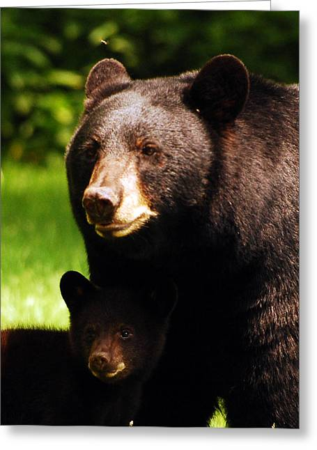 Backyard Bears Greeting Card by Lori Tambakis
