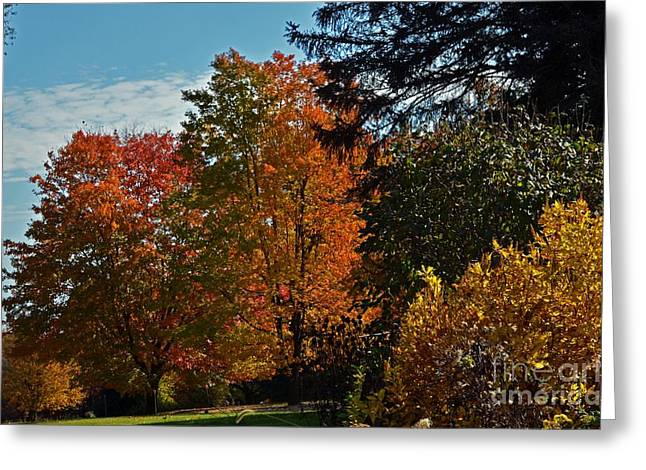 Greeting Card featuring the photograph Backyard Beauty by Judy Wolinsky