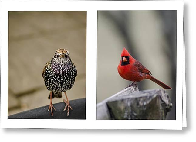 Backyard Bird Set Greeting Card by Heather Applegate