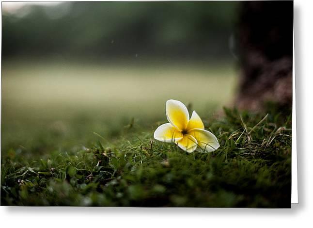Backyard Flower Greeting Card by Jason Bartimus