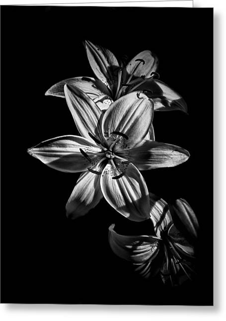 Backyard Flowers In Black And White 9 Greeting Card