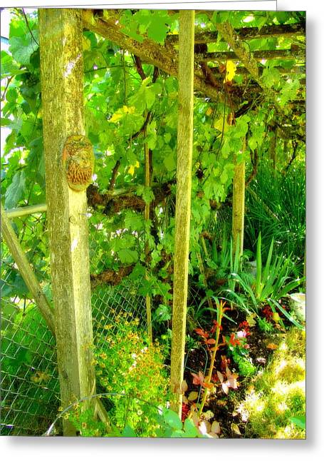 Backyard Grape Arbor Greeting Card by Jeri lyn Chevalier