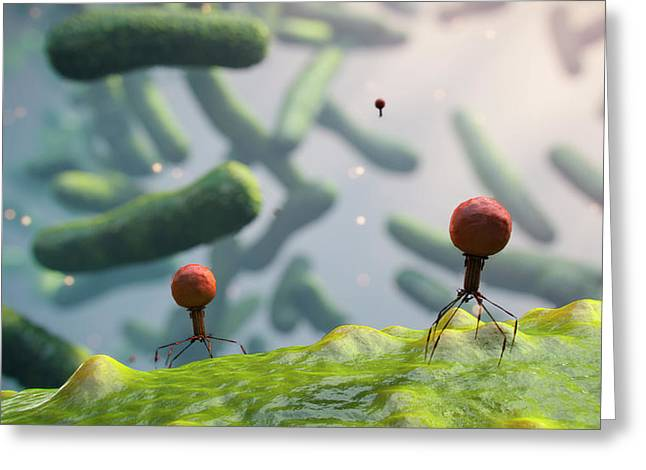 Bacteriophages On Bacteria Greeting Card