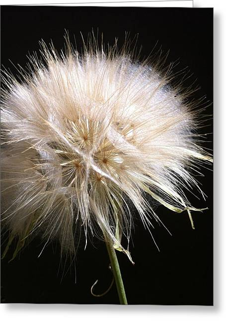 Bad Hair Day Greeting Card by Stephanie Aarons