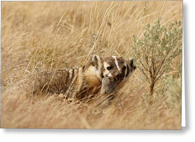 Badger With Prey Greeting Card
