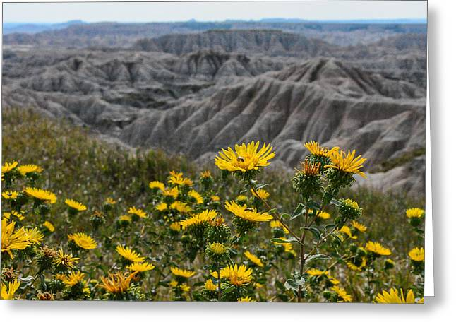 Badlands Flowers Greeting Card by Robin Williams