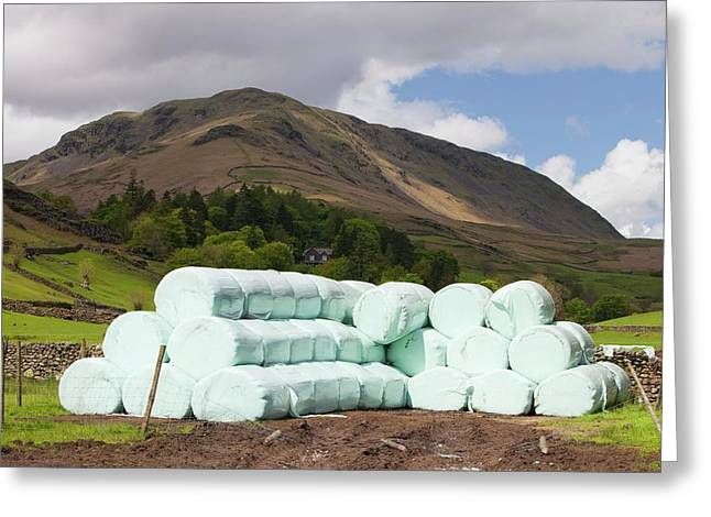 Bags Of Silage On A Farm Greeting Card by Ashley Cooper