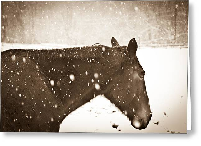 Bailys In Cream Greeting Card by Nickaleen Neff