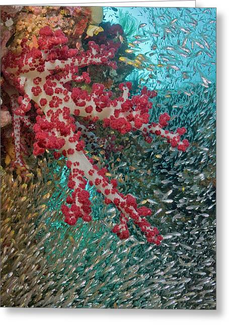 Baitfish Schooling Around Soft Coral Greeting Card by Jaynes Gallery