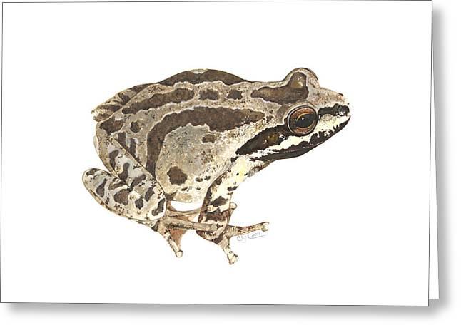 Baja California Treefrog Greeting Card