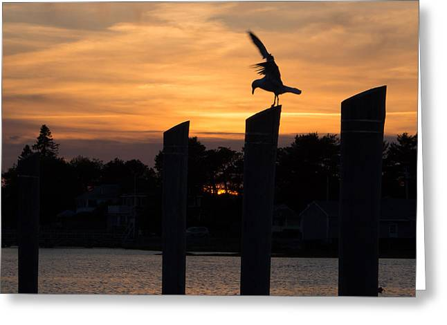 Balance - A Seagull Sunset Silhouette Greeting Card