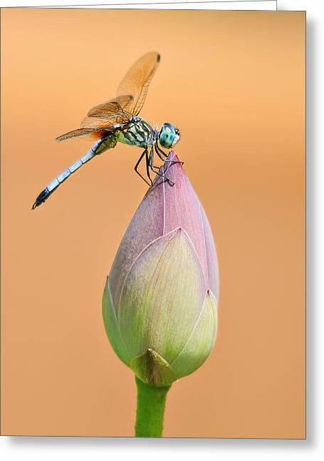Balance Of Nature Greeting Card