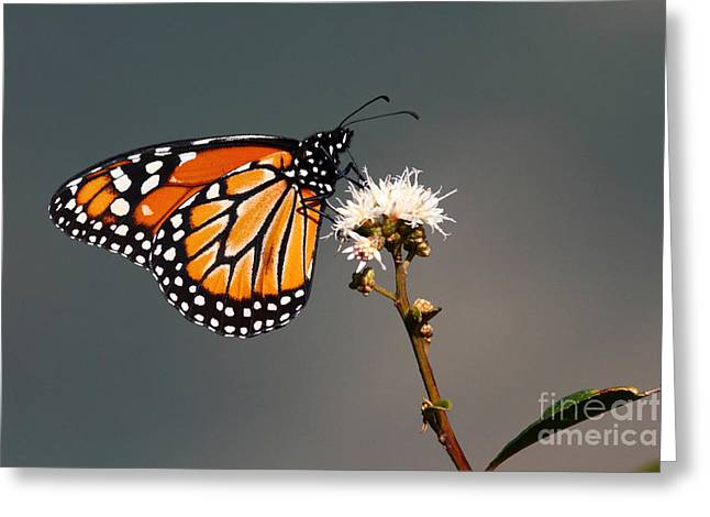 Balancing Act Greeting Card by James Brunker