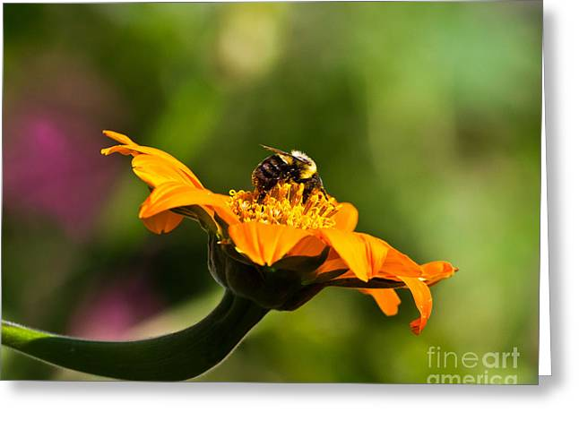 Balancing Bumblebee Greeting Card