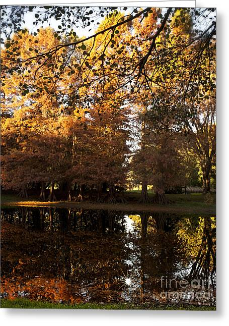 Bald Cypress Autumn Greeting Card