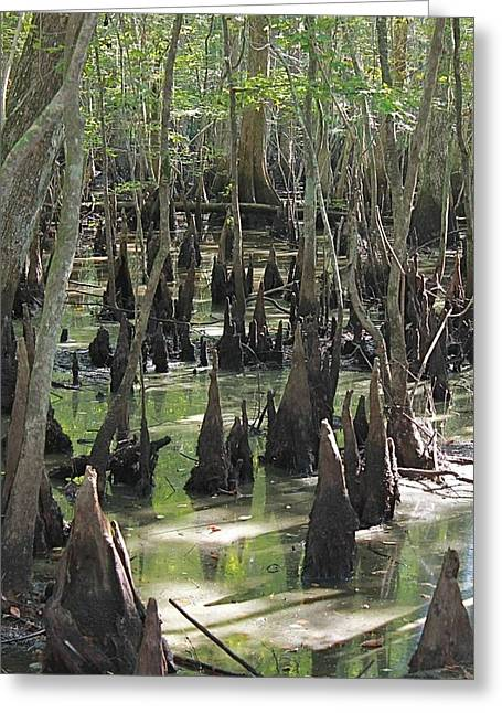 Bald Cypress Trees Greeting Card