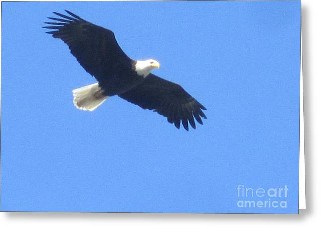 Bald Eagle At Lake Rowena Greeting Card by Jeffrey Koss