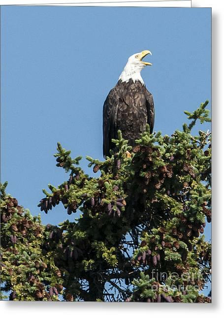 Bald Eagle Greeting Card by Bob Dowling