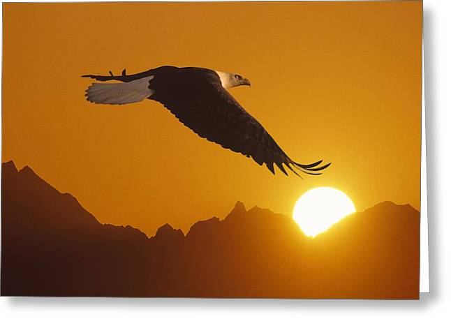 Bald Eagle In Flight Sunset Over Mtn Greeting Card by John Warden