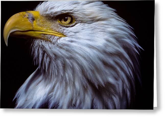 Greeting Card featuring the photograph Bald Eagle by Jeff Goulden