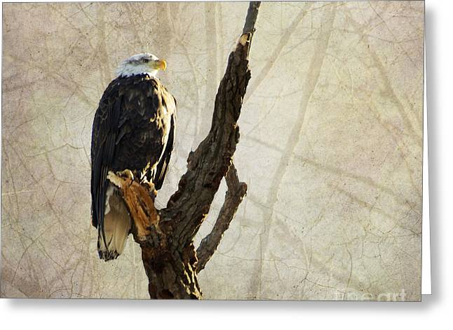 Bald Eagle Keeping Watch In Illinois Greeting Card by Luther Fine Art