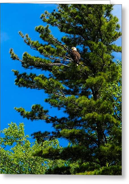 Bald Eagle   Greeting Card by Lars Lentz
