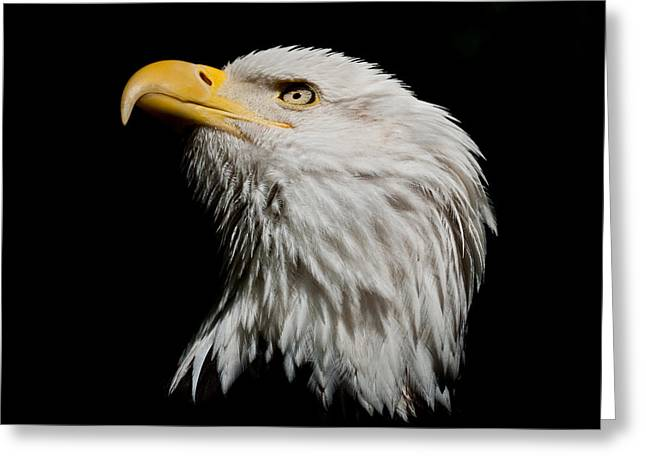 Bald Eagle Looking Skyward Greeting Card