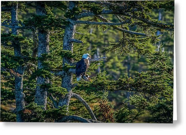 Bald Eagle Majesty Greeting Card