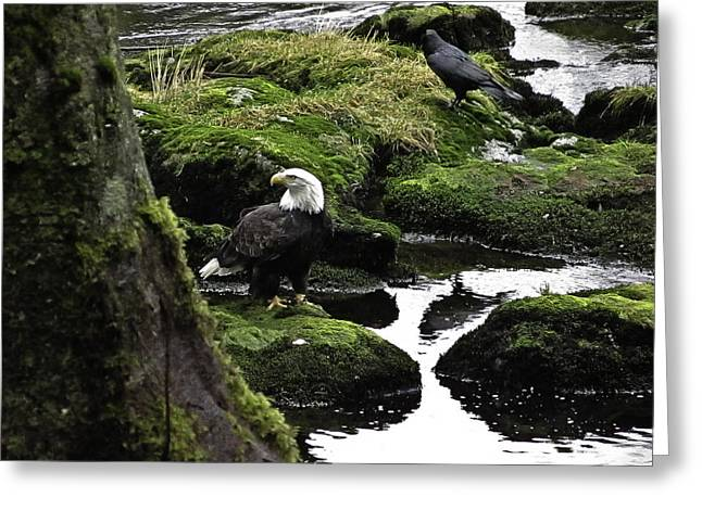 Greeting Card featuring the pyrography Bald Eagle On The Creek. by Timothy Latta