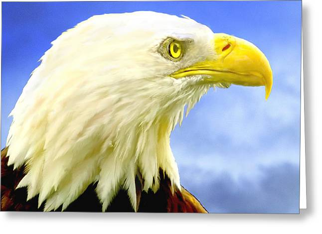Bald Eagle Painting For Sale Greeting Card