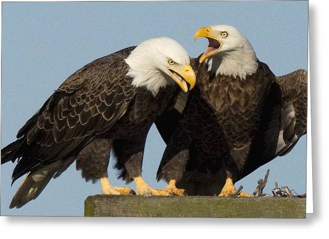 Bald Eagle Pair Greeting Card