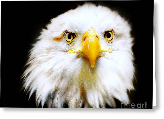 Bald Eagle Greeting Card by Jacky Gerritsen