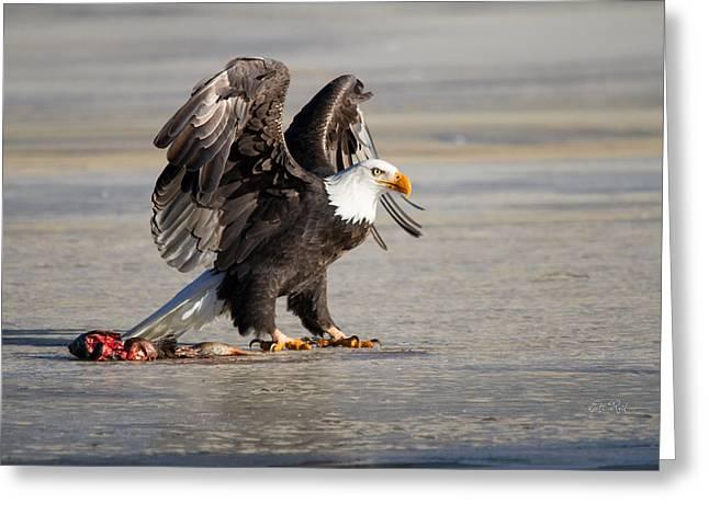 Bald Eagle Protecting His Food  Greeting Card