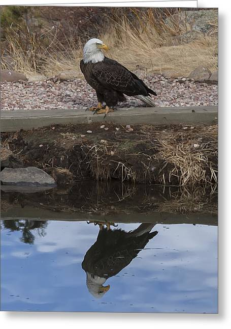 Bald Eagle Reflection Greeting Card by Perspective Imagery