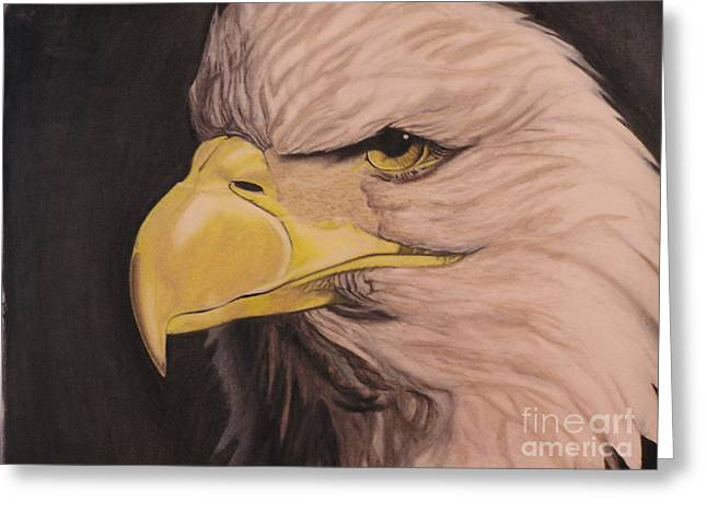 Bald Eagle Greeting Card by Wil Golden