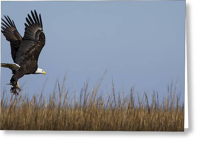 Bald Eagle With Bird In Talons Greeting Card