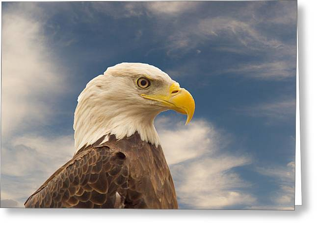 Bald Eagle With Piercing Eyes 1 Greeting Card by Douglas Barnett