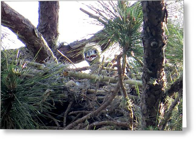 Bald Eagles Chick II Greeting Card by Zina Stromberg