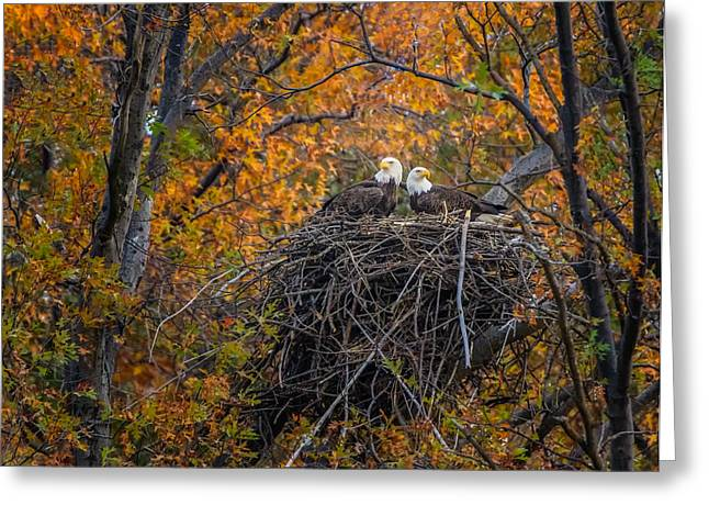 Bald Eagles Nest In Fall Greeting Card