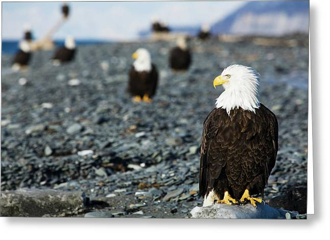 Bald Eagles Standing On The Shore Greeting Card
